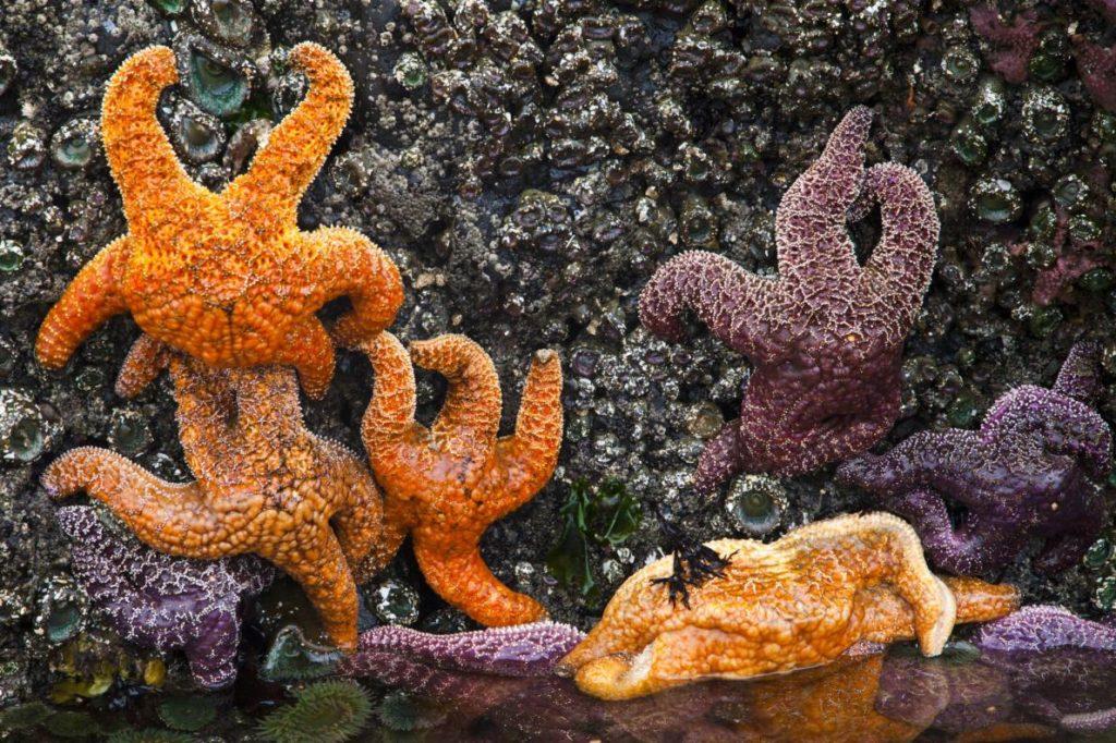 sea-stars